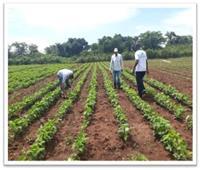 الزراعة: طفرة في إنشاء المزارع المصرية في أفريقيا خلال 6 سنوات