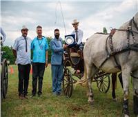 مسابقة فروسية في صربيا تبرز سلالة الحصان العربي المصري وتروج للسياحة