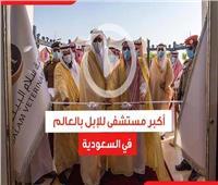 فيديوجراف| أكبر مستشفى للإبل بالعالم في السعودية