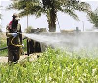 عبد الستار: نبحث عن حلول خارج الصندوق لمواجهة الاستخدام غير الآمن للمبيدات