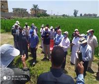 تنفيذ مدرسة حقلية إرشادية لمحصول الذرة الشامية بمحافظة كفر الشيخ