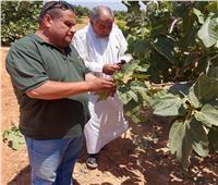 «التنمية المستدامةلموارد مطروح» يدعم مزارعي النجيلة وبراني والسلوم