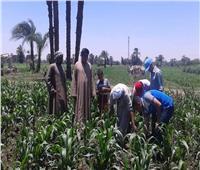 صور| الزراعة: مدارس إرشادية في 3 محافظات