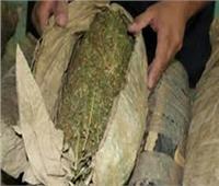 ضبط أحد الأشخاص وبحوزته 30 كيلو جرام من مخدر البانجو بالشرقية