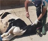 محافظ المنيا يحٌظر ذبح الأضاحي بالطرق والشوارع وخارج المجازر المعتمدة