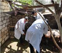 الزراعة: تحصين أكثر من 2 مليون رأس ماشية ضد مرض الحمى القلاعية