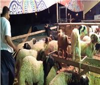 محافظ شمال سيناء يؤكد على توافر أضاحي العيد أمام المواطنين