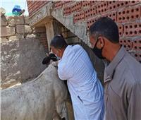 صور..الزراعة: تحصين أكثر من 1.9 مليون رأس ماشية ضد حمى الوداي المتصدع