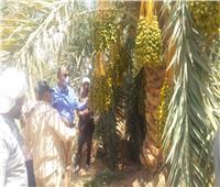 «الزراعة» تفتتح ٤ مراكز إرشادية بقرى الوادي الجديد