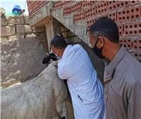 الزراعة: ذبح 100 ألف رأس ماشية خلال شهر يوليو في مجازر القاهرة