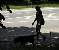 التقط العدوى من مالكه.. نفوق أول كلب مصابا بكورونا في نيويورك