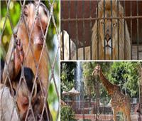 خاص  مدير حديقة الحيوان: جاهزين لاستقبال الجمهور في أي وقت فور صدور قرار