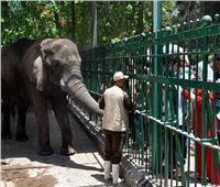 خاص  مدير حديقة الحيوان: برامج خاصة للحيوانات.. وتليفزيون للشمبانزي