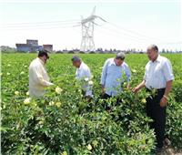 """""""الزراعة"""" تتابع حالة المحاصيل الصيفية في دمياط أول أيام عيد الأضحى"""