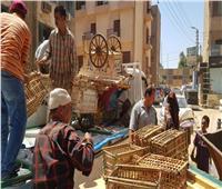 سوهاج: 393 مضبوطات متنوعة وتحرير 50 محضر إشغال خلال عيد الأضحى