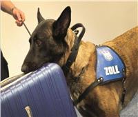 كلبة تحبط تهريب ربع مليون يورو بمطار ألمانيا