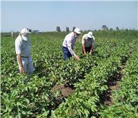 الزراعة: توقيع بروتوكول تعاون مع «سيكم» لإنتاج تقاوي القطن الحيوي