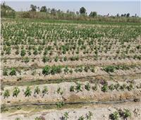 صور| «الزراعة» تواصل زياراتها الميدانية للتوعية بأهمية تطبيق التقنيات الحديثة