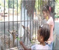 فيديو وصور  فسحة حديقة الحيوان تعود من جديد.. وشروط للدخول