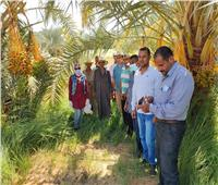 صور.. «الزراعة»: 21 مدرسة حقلية خلال أسبوع في معظم المحافظات