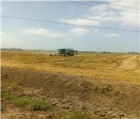 صور..«الزراعة»: بدء حصاد الأرز بـ 3000 فدان بمزارع قطاع الإنتاج في كفر الشيخ ودمياط