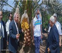 «الزراعة» تطلق حملة للتوعية بمنظومة الريالحديث بالقليوبية احتفالا بعيد الفلاح