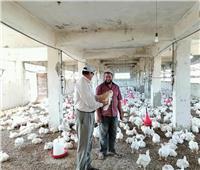 الزراعة: إعادة تشغيل مزرعتين للدواجن بدمياط بعد فترة طويلة من التوقف