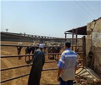محافظ أسيوط: متابعة مستمرة لخطة تطوير مزارع الثروة الحيوانية