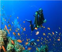«غرفة الغوص» تعلن عن دورات التوعية البيئية للعاملين بالقطاع