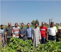 صور| «الزراعة»: تنفيذ 25 مدرسة حقلية في 12 محافظة خلال أسبوع