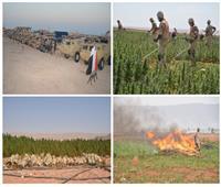 القوات المسلحة تنجح في القضاء على 66 فدان «بانجو» و101 فدان «هيدرو» بجنوب سيناء