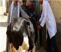 الزراعة: اطلاق الحملة القومية اللتحصين ضد مرض الحُمى القلاعية