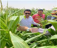 مساعد وزير الزراعة ورئيس قطاع الانتاج يتفقدان مزارع شرق العوينات