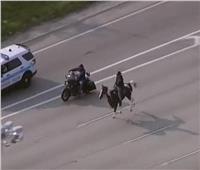للتوعية بقضايا الطفولة.. رجل يربك حركة المرور ويسير بحصانه في ساعة الذروة |فيديو