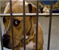 """«مقرمشات مالحة ولحم مقدد» لإنقاذ حياة """"كلب"""" من الهلاك.. فيديو"""