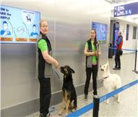 فيديو.. الكلاب سلاح اليشر للكشف عن الإصابة بكورونا