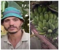 حكايات |«شجر الموز طرح» بالقليوبية.. الأرض الطيبة رزق الفلاحين «من 100 سنة»