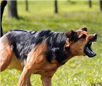 في اليوم العالمي للسعار.. طريقة التعامل الصحيحة مع «عضة الكلب»