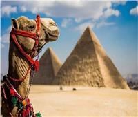 السياحة: الإعلان عن كشف أثري جديد في سقارة.. 3 أكتوبر المقبل