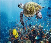 9 نقاط ترصد أهمية التنوع البيولوجي