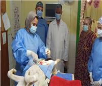 مديرية الطب البيطري بالبحر الأحمر تجري عمليات خصي وتحصين للكلاب