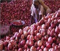 """""""الزراعة"""" تصدر نشرة بأفضل طرق زراعة البصل"""