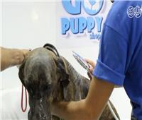 فيديو| «باديكير ومانيكير» دليفري.. لأول مرة كوافير متنقل للحيوانات الأليفة في مصر
