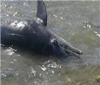 نفوق الدلافين يفتح الملف.. متى يتوقف الصيد الجائر في محميات مرسى علم؟