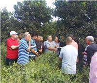 مسئولو «الزراعة» بالغربية يتفقدون أوضاع «شبرا بلولة»
