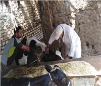 تحصين253 ألف رأس ماشية بالمنوفية