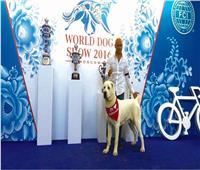 حكايات| «أسد» يفوز بـ«أفضل كلب» في مصر ٧ مرات