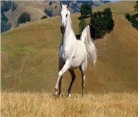 بالفيديو.. حصان يكشف عن مواهبه الكروية