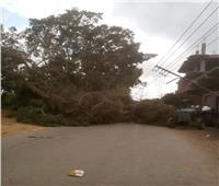 سقوط شجرة ضخمة بسبب شدة الرياح في الغربية