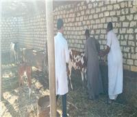 صور | الزراعة تعلن تحصين 4.3 مليون رأس ماشية ضد الحمى القلاعية